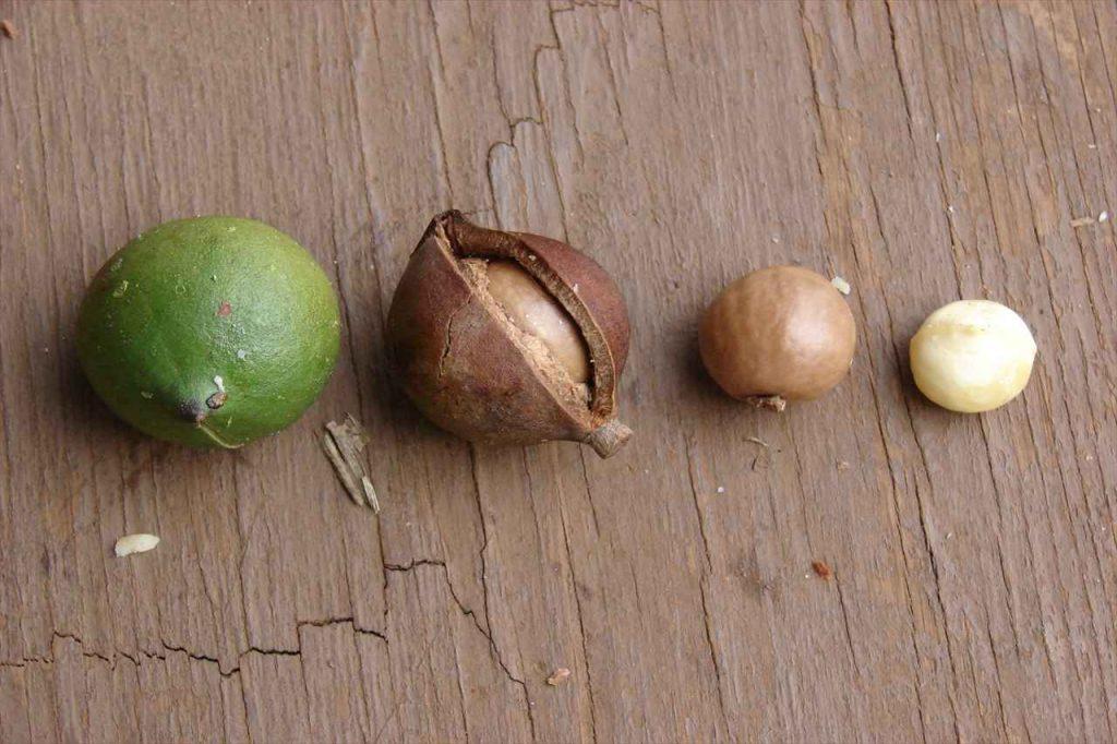 マカダミアナッツの写真