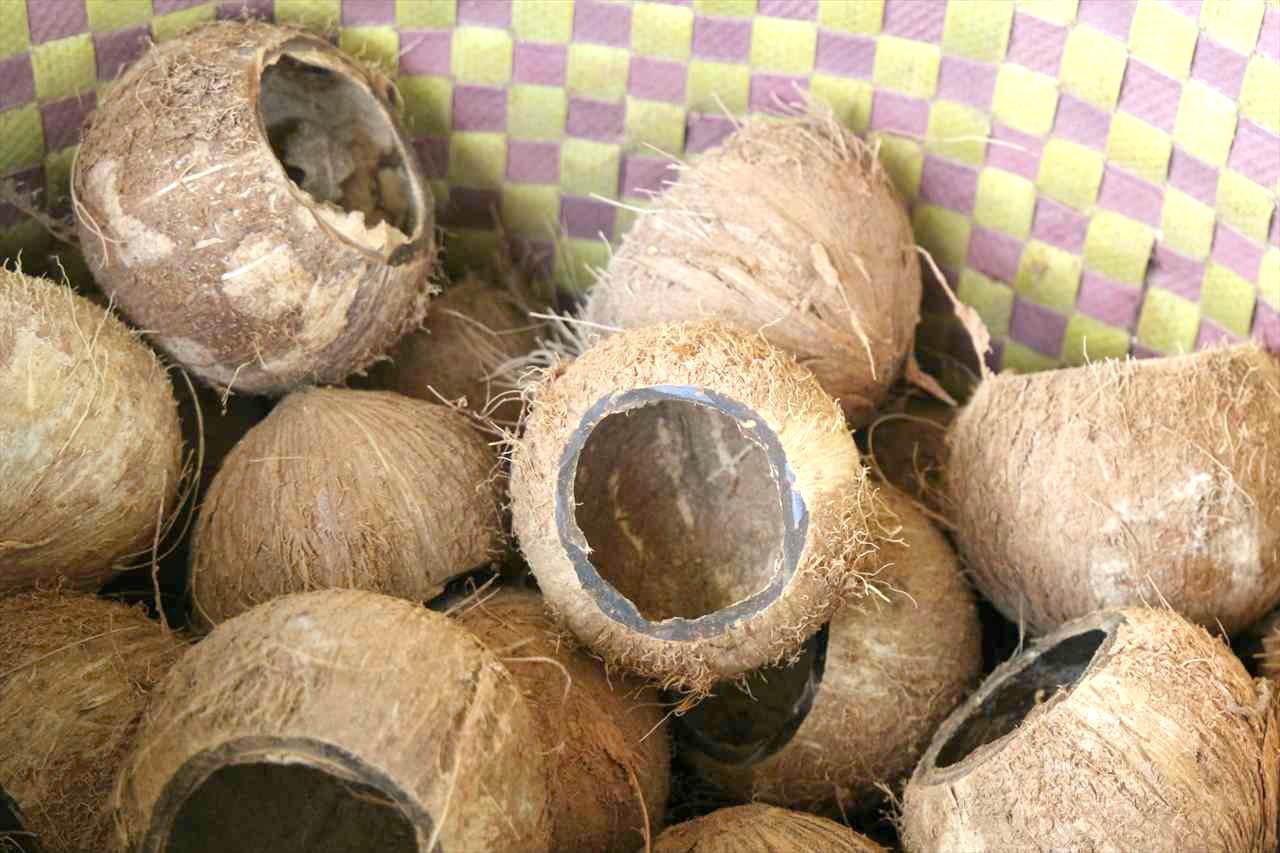メコンデルタはココナッツの産地