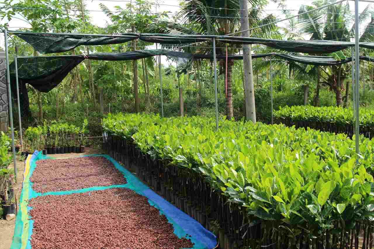 カカオ農家の敷地写真