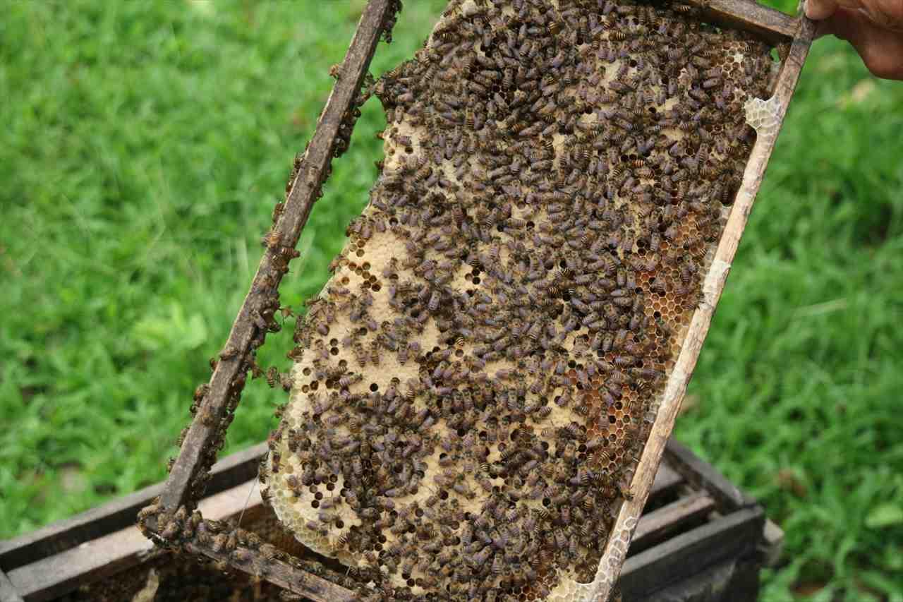 Hình ảnh tổ ong