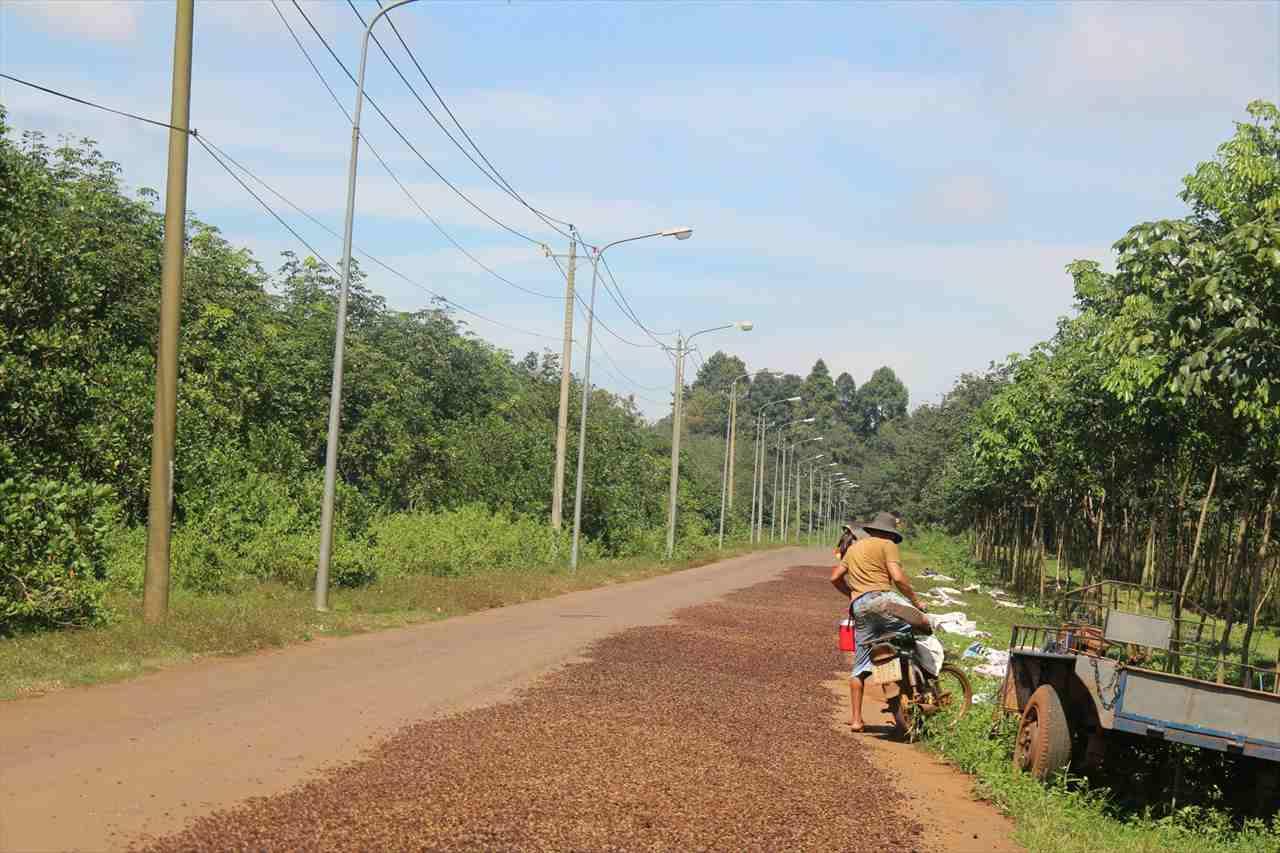 ベトナムの田舎道の写真