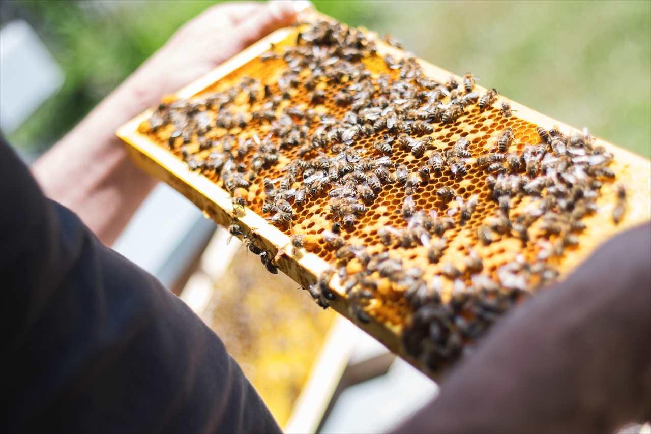 蜂蜜の巣箱の写真