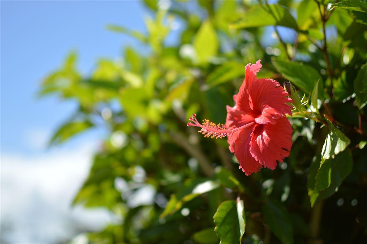 南国の花の写真