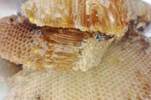 ハチの巣の写真
