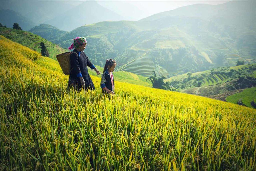 ベトナムの山岳地帯