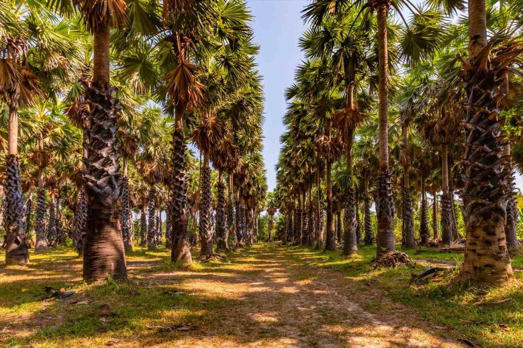 ベトナムで最も高い蜂蜜は「森の生はちみつ」