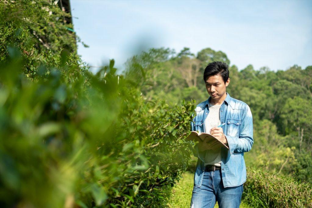 実はベトナムのお茶の生産高&輸出高は日本より上!
